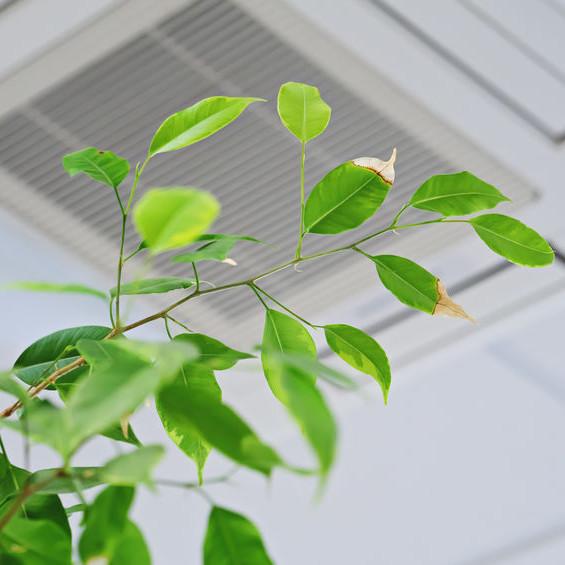 A plant under an air vent.